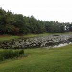 みそぎ池(御池)全景