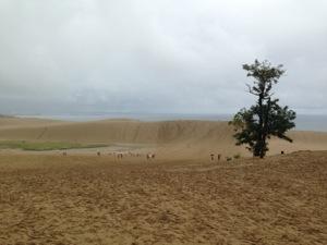 鳥取砂丘の全景