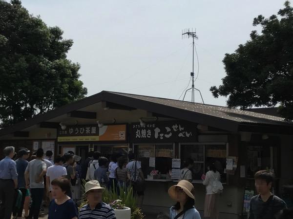 江ノ島 タコせんべい